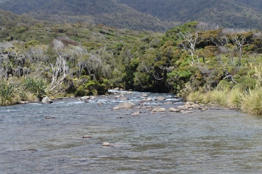 New Zealand Fly Fishing Expeditions South Westland Bush