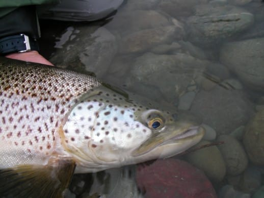 New Zealand Fly Fishing Expeditions - zoned into cicadas