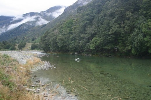 Spotting NZ Trout