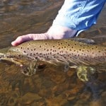 NZ Fly Fishing Expeditions PP (23)