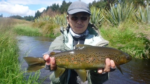 Small water trout often punch way above the size!