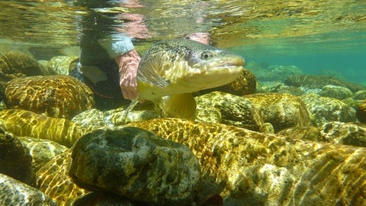 New Zealand Fly Fishing Expeditions - JTH (79)
