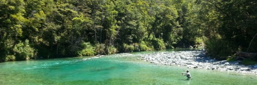 New Zealand Fly Fishing Expeditions - Beech Trees