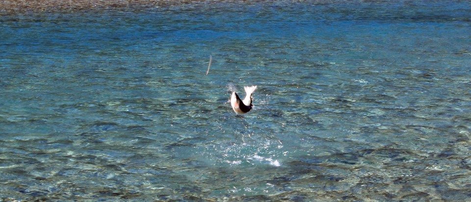 Fly Fishing Queenstown be ready for the 2011/12 season!